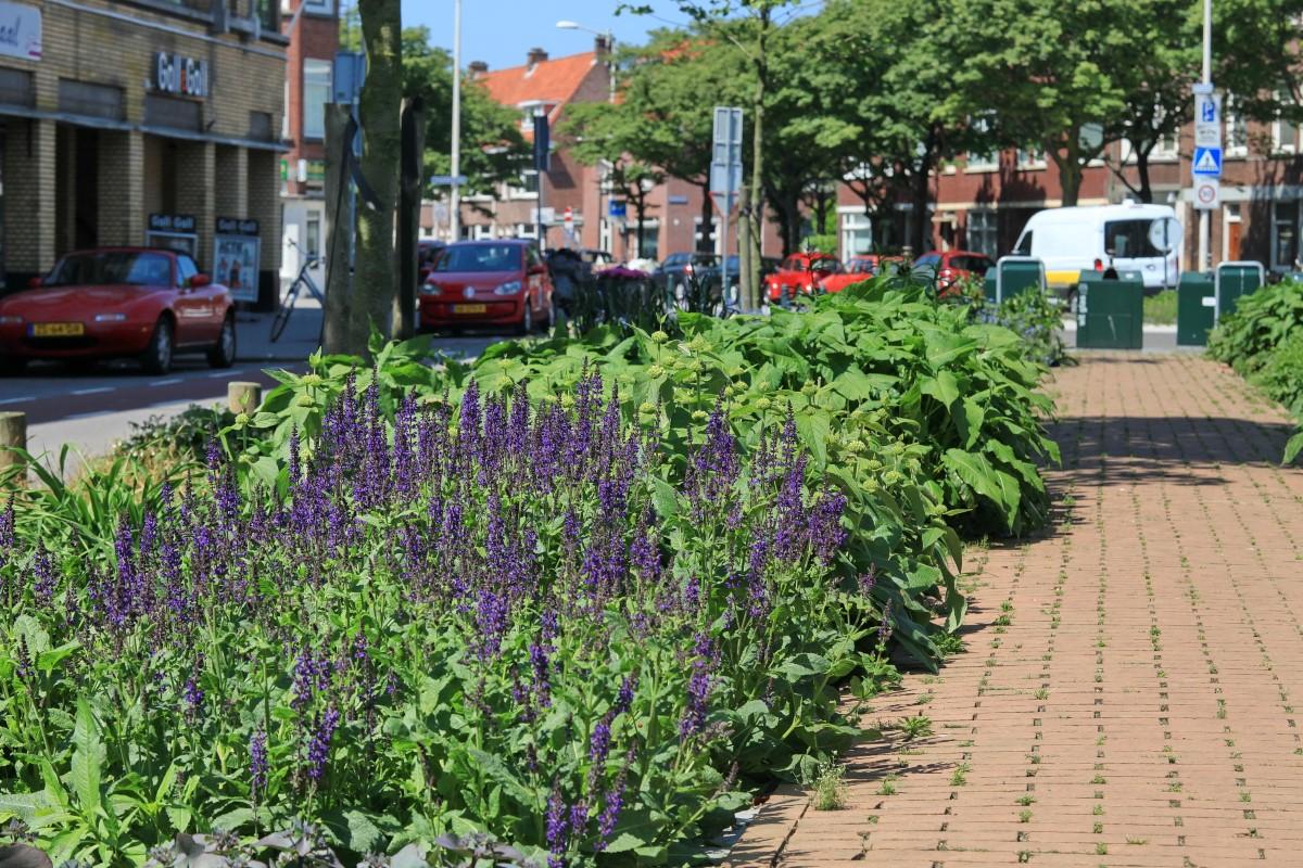 GreentoColour20160606_middenberm_winkelstraat (3)