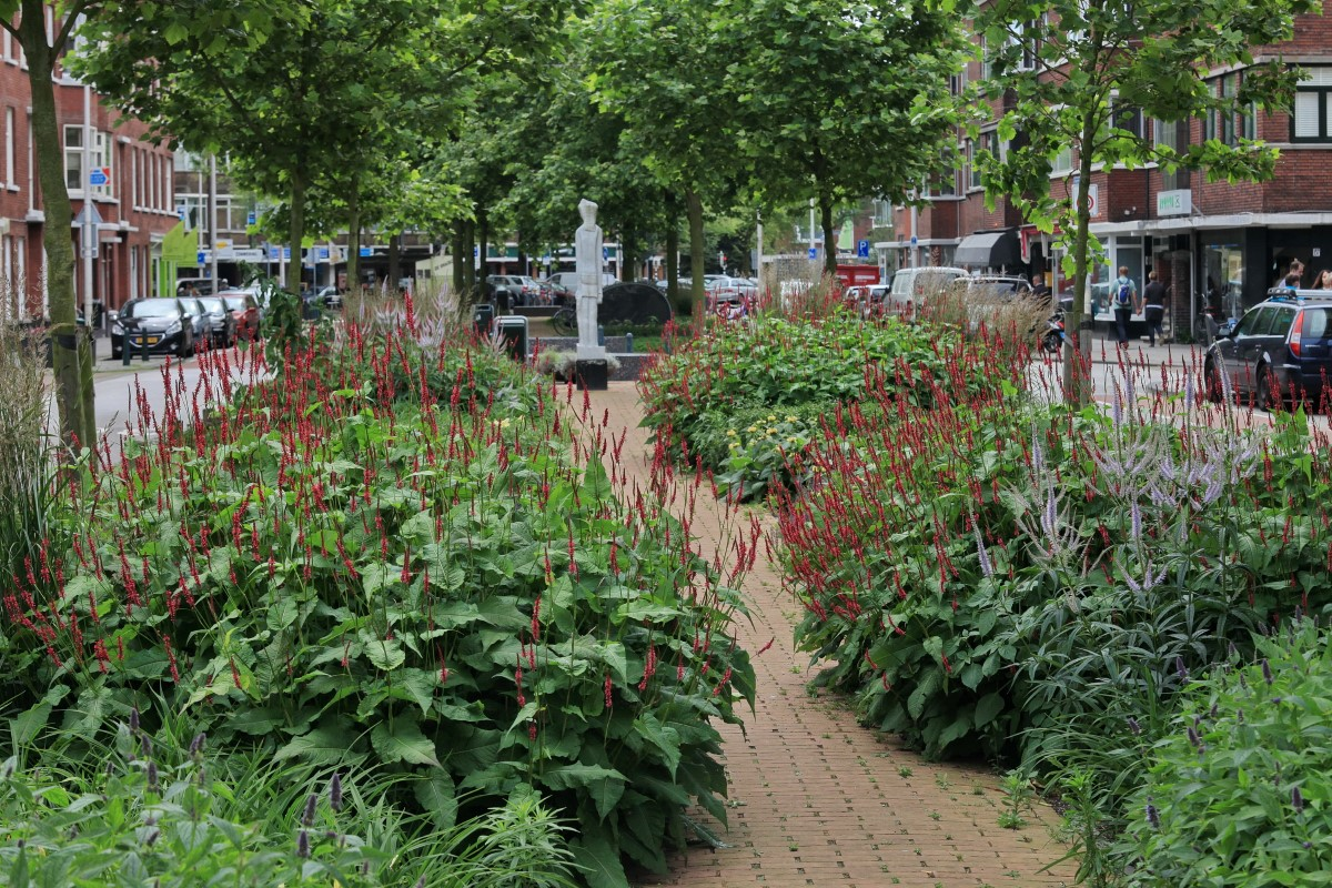 GreentoColour20160707_middenberm_winkelstraat (4)