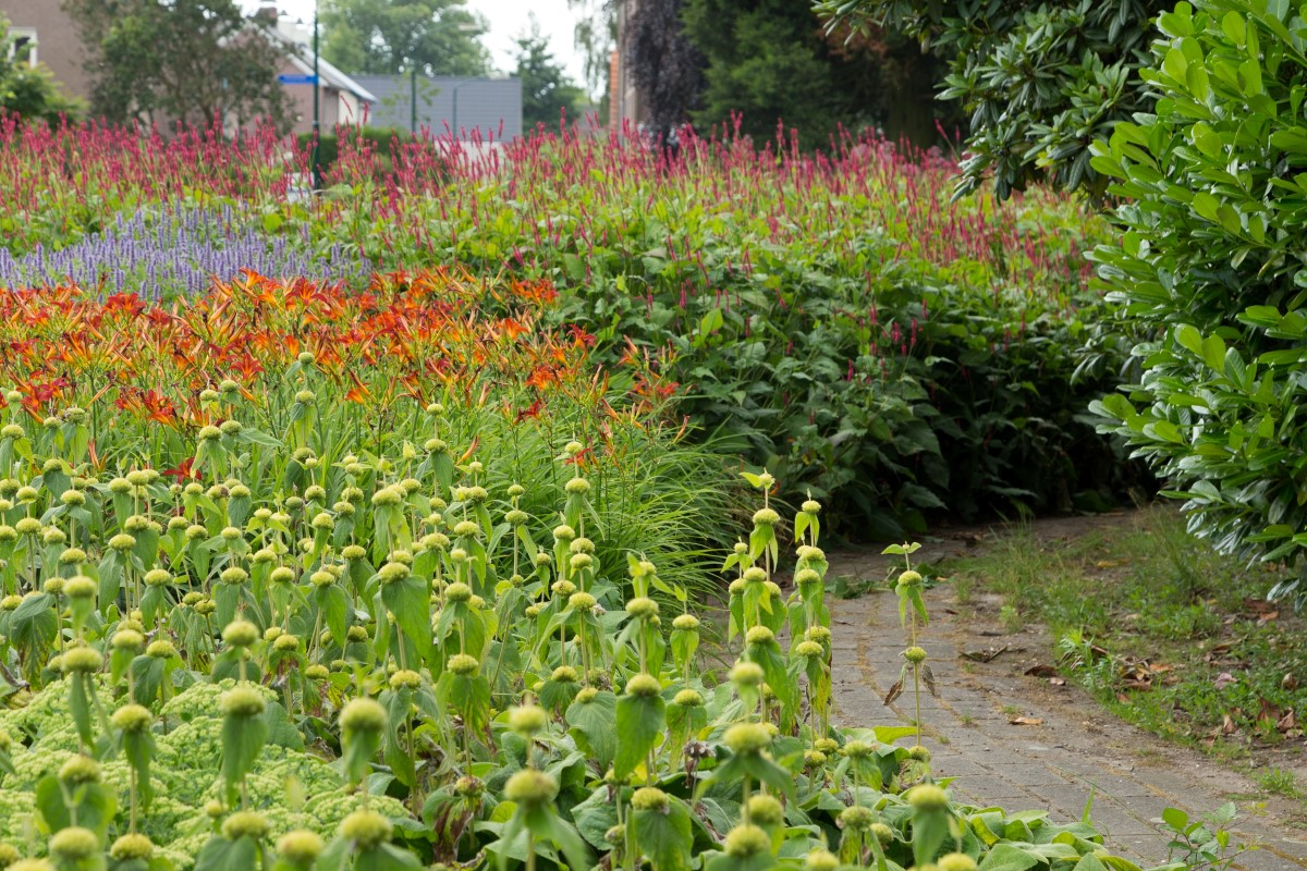 GreentoColour20160715_kloostertuin (2)
