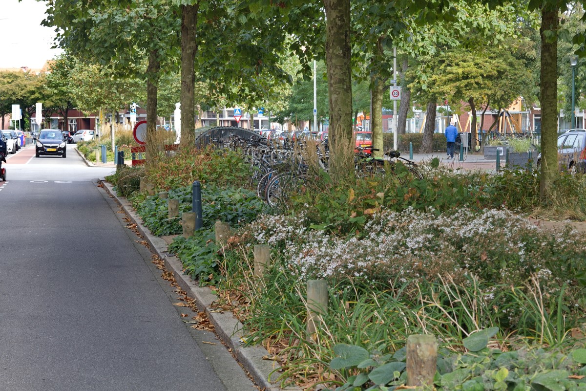 greentocolour20161011_middenberm_winkelstraat-4