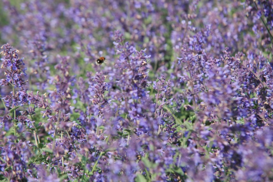 Green-to-Colour biodiversiteit_insecten (11)