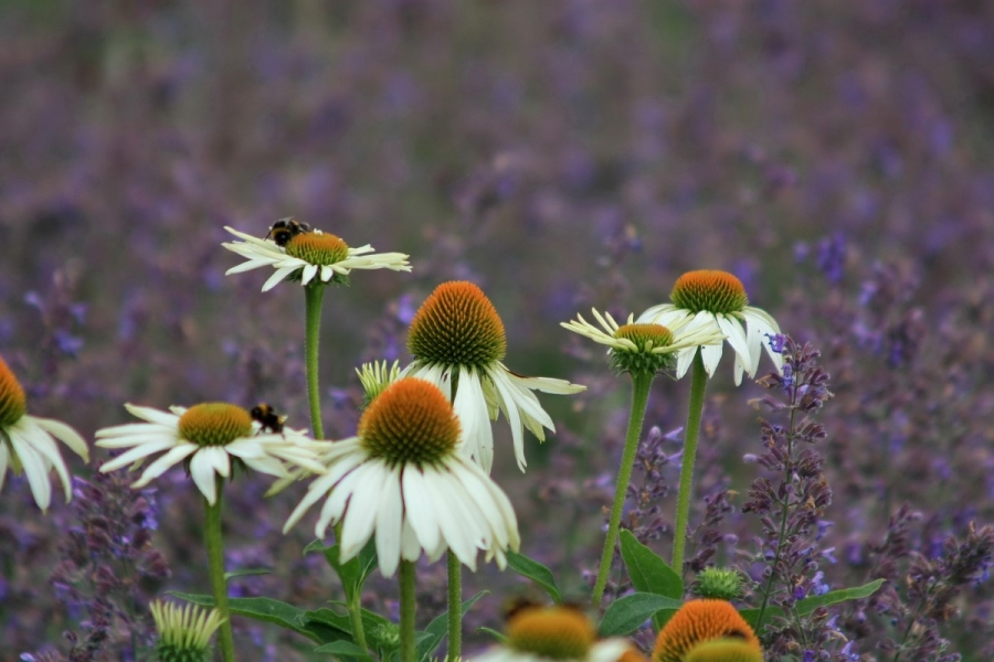 Green-to-Colour biodiversiteit_insecten (13)