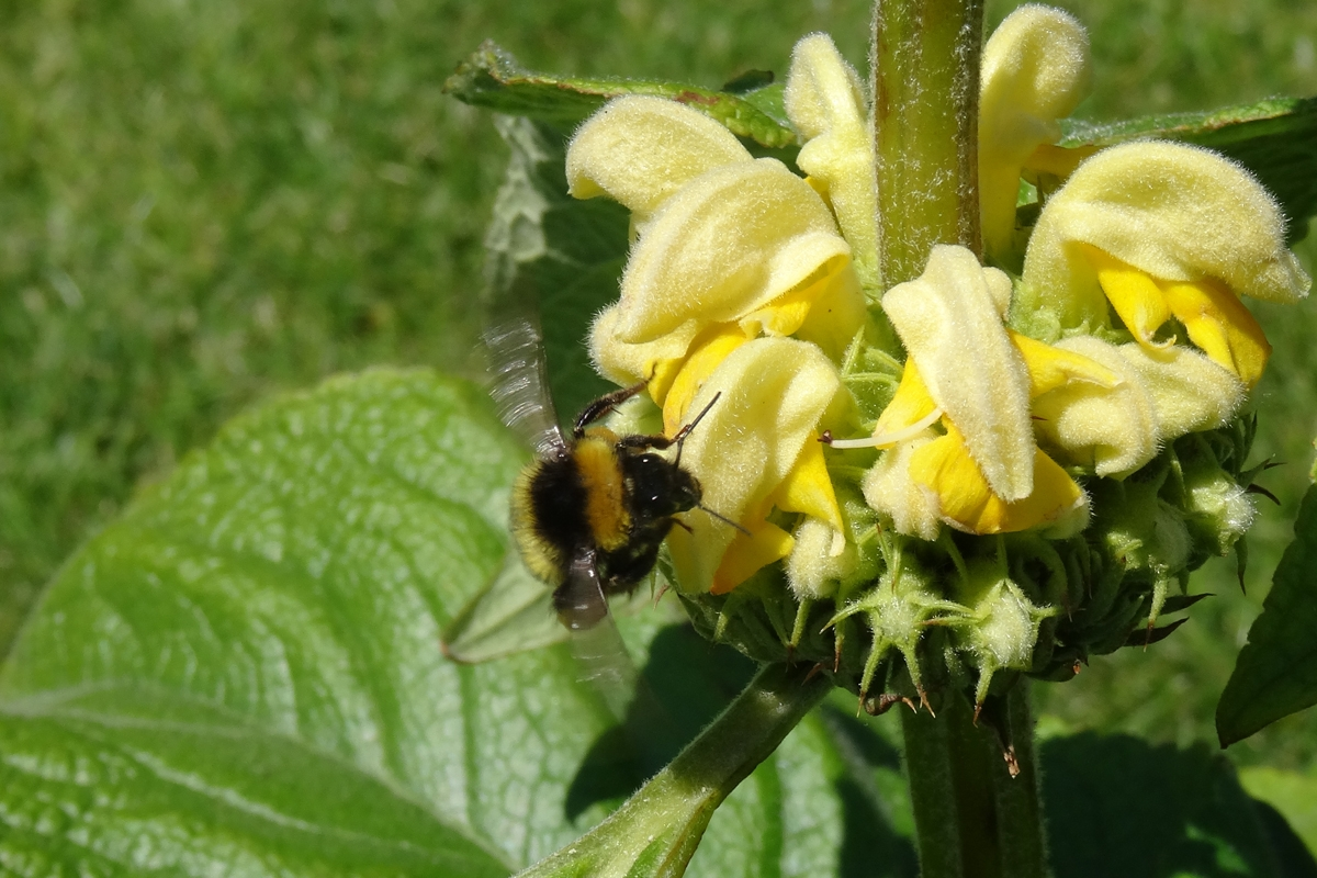Green-to-Colour biodiversiteit_insecten (18)