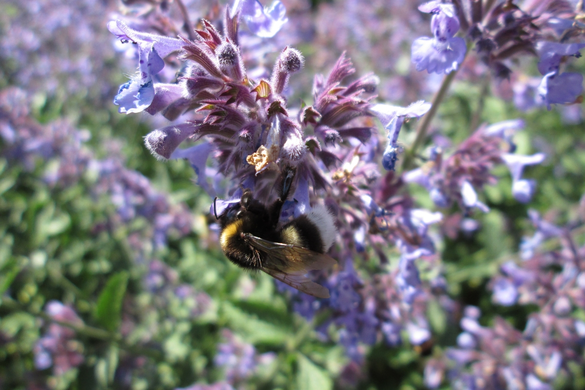 Green-to-Colour biodiversiteit_insecten (20)