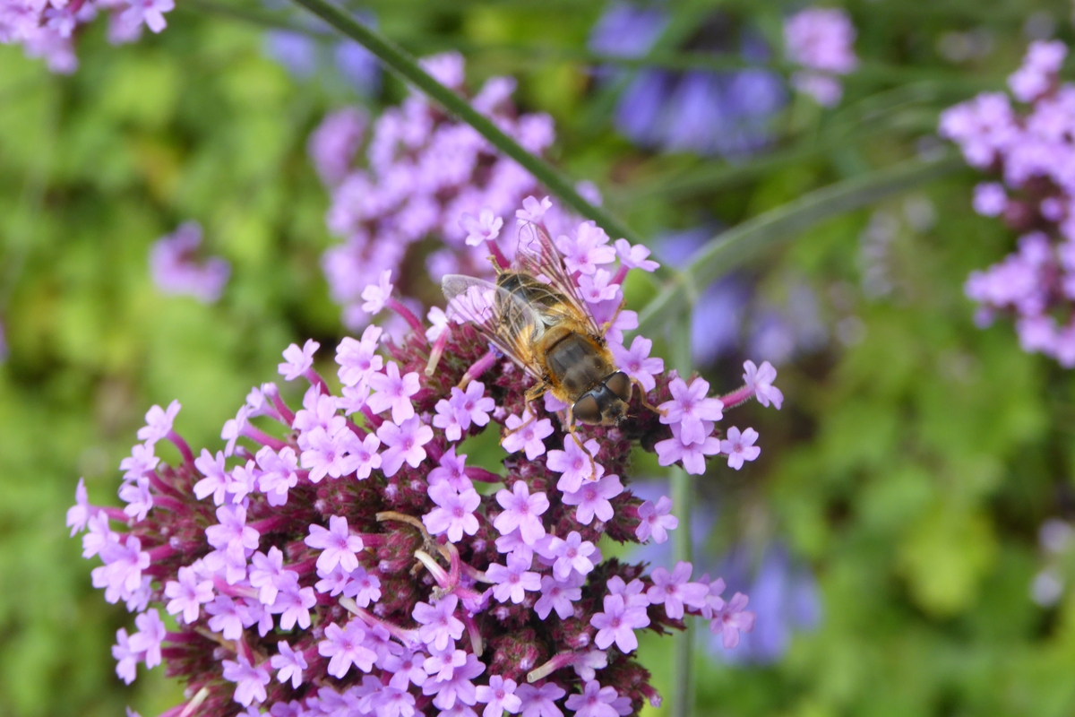 Green-to-Colour biodiversiteit_insecten (21)