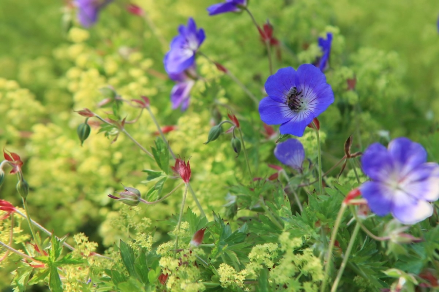 Green-to-Colour biodiversiteit_insecten (03)