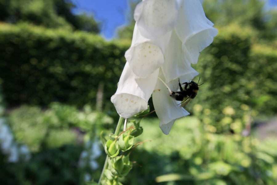 Green-to-Colour biodiversiteit_insecten (05)