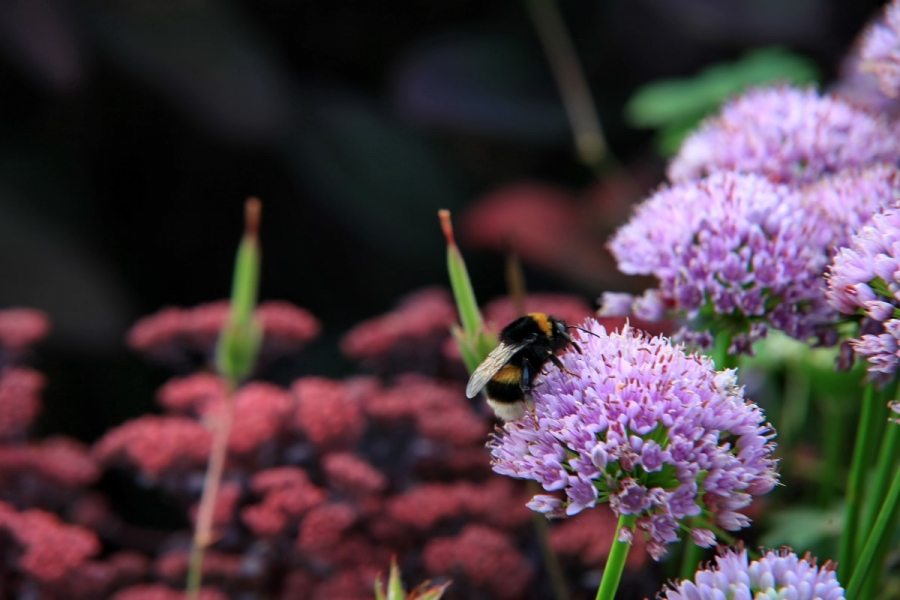 Green-to-Colour biodiversiteit_insecten (06)