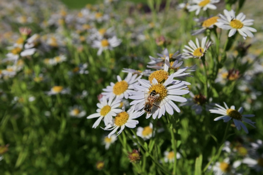 Green-to-Colour biodiversiteit_insecten (09)
