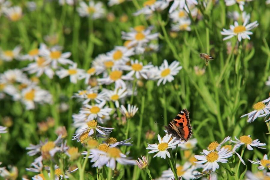 Green-to-Colour biodiversiteit_vlinders (01)