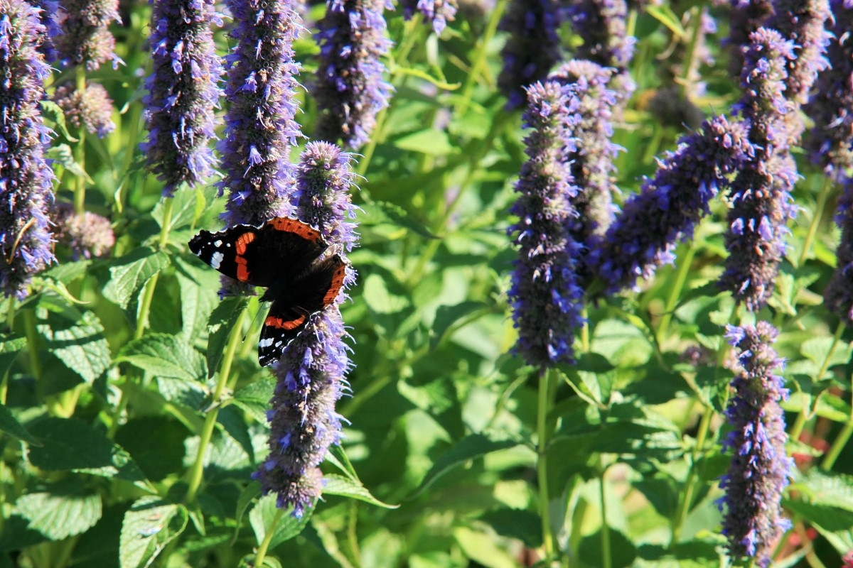 Green-to-Colour biodiversiteit_vlinders (10)