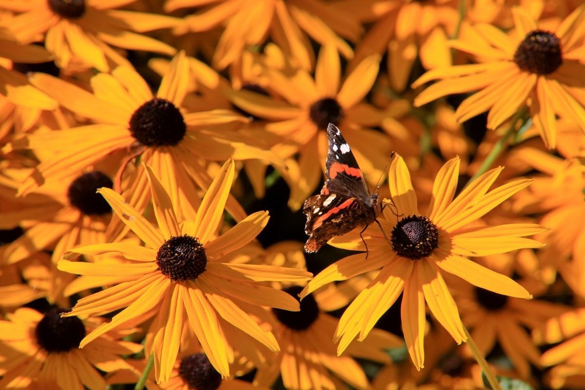 Green-to-Colour biodiversiteit_vlinders (11)