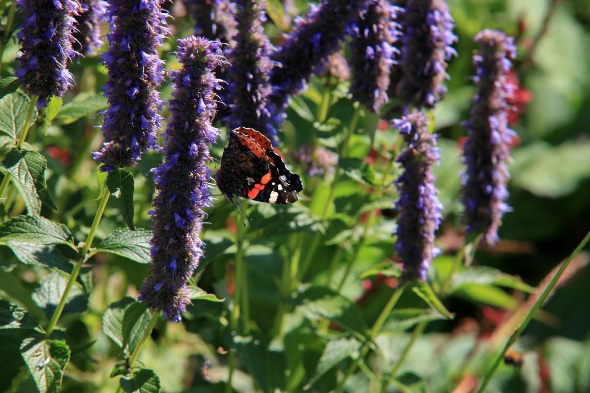 Green-to-Colour biodiversiteit_vlinders (12)