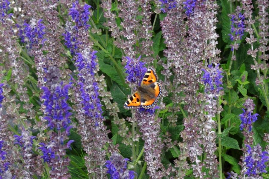 Green-to-Colour biodiversiteit_vlinders (02)