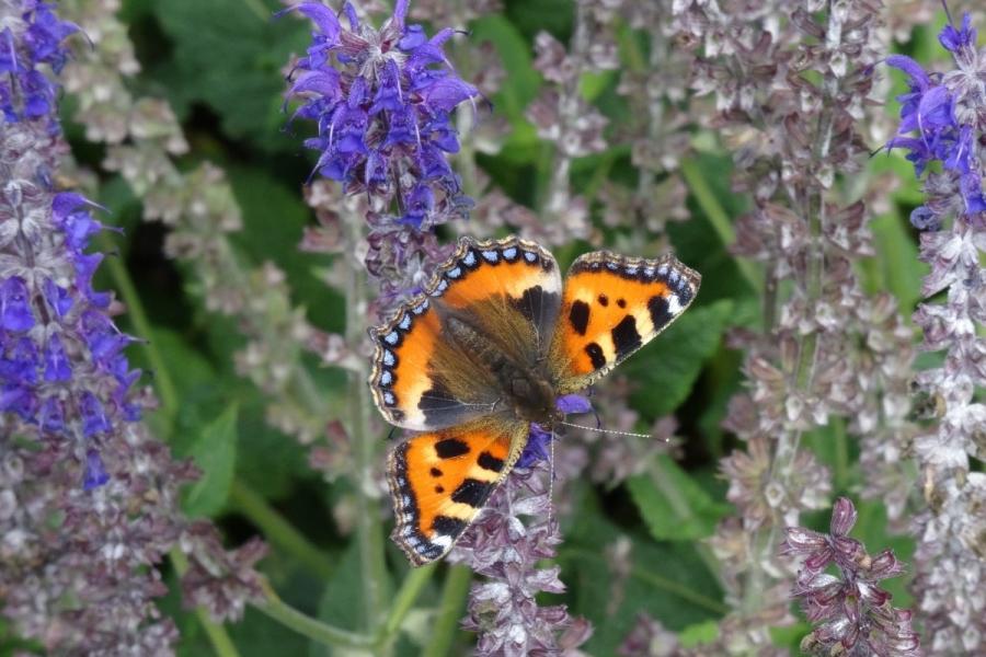 Green-to-Colour biodiversiteit_vlinders (03)
