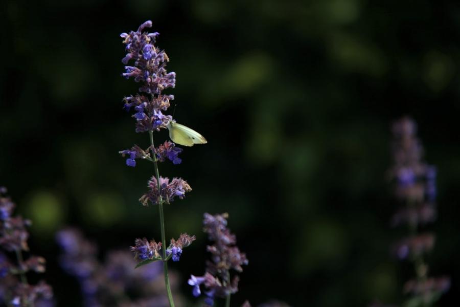 Green-to-Colour biodiversiteit_vlinders (05)