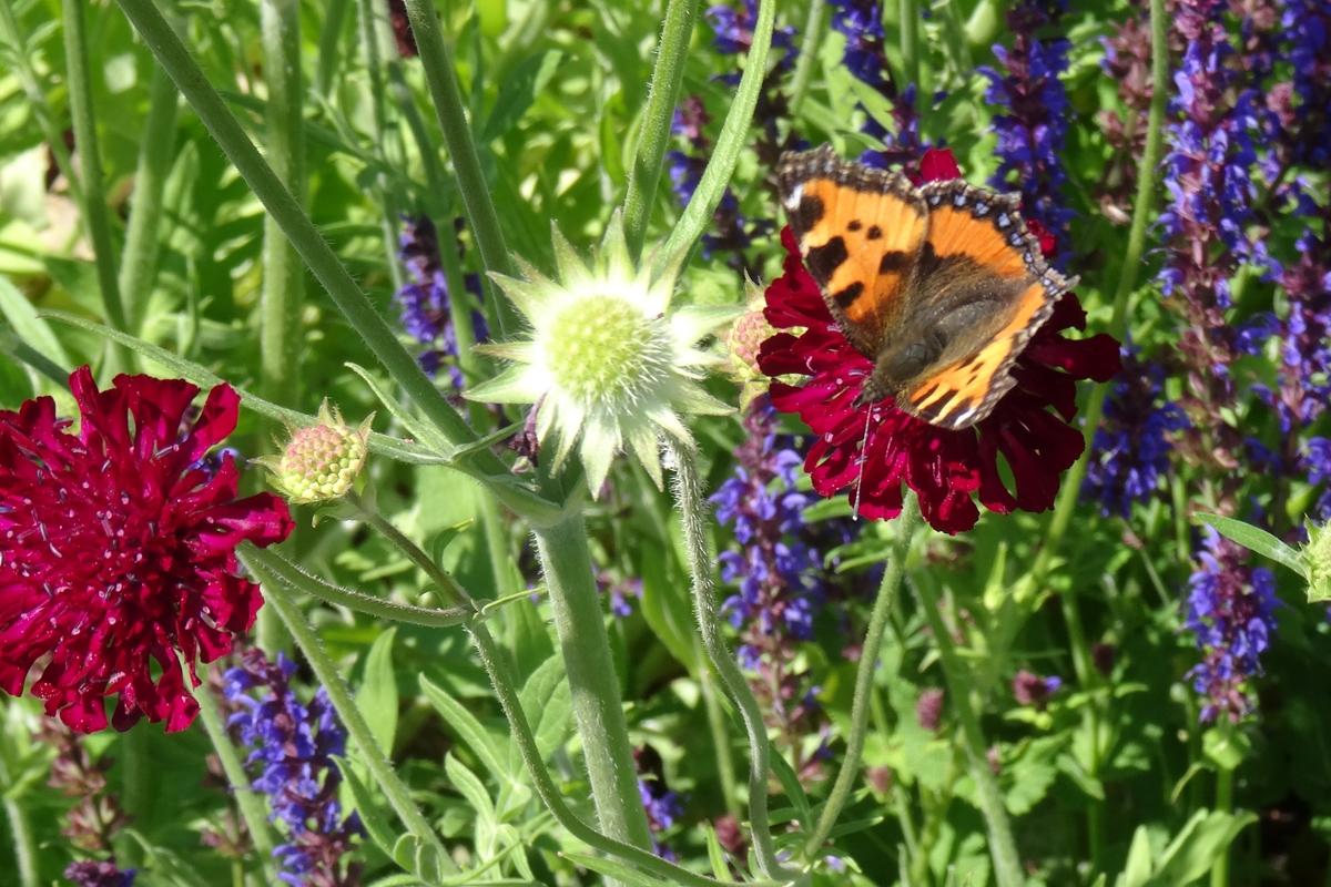 Green-to-Colour biodiversiteit_vlinders (6)