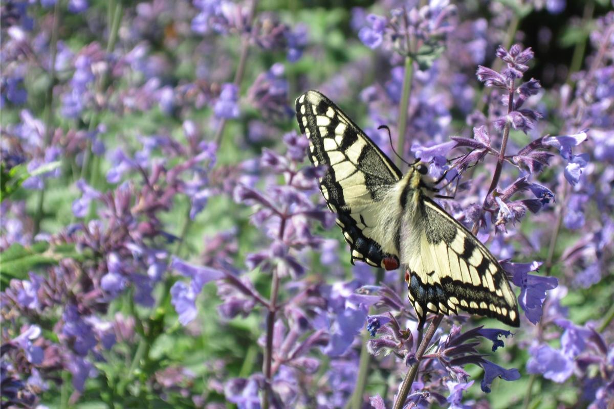 Green-to-Colour biodiversiteit_vlinders (7)
