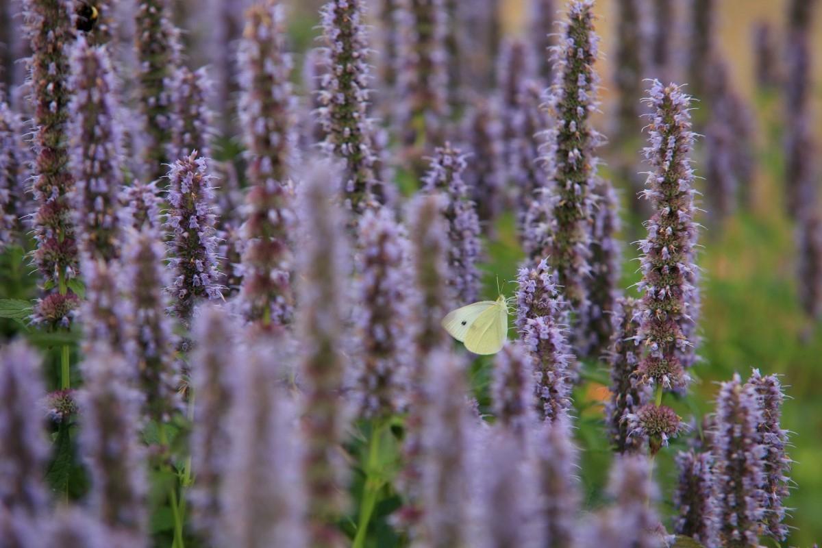Green-to-Colour biodiversiteit_vlinders (8)