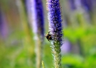 Green-to-Colour biodiversiteit_insecten (02)