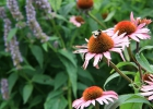 Green-to-Colour biodiversiteit_insecten (22)