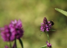 Green-to-Colour biodiversiteit_insecten (04)