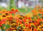 GreentoColour biodiversiteit_insecten (25)