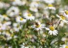 GreentoColour biodiversiteit_insecten (28)