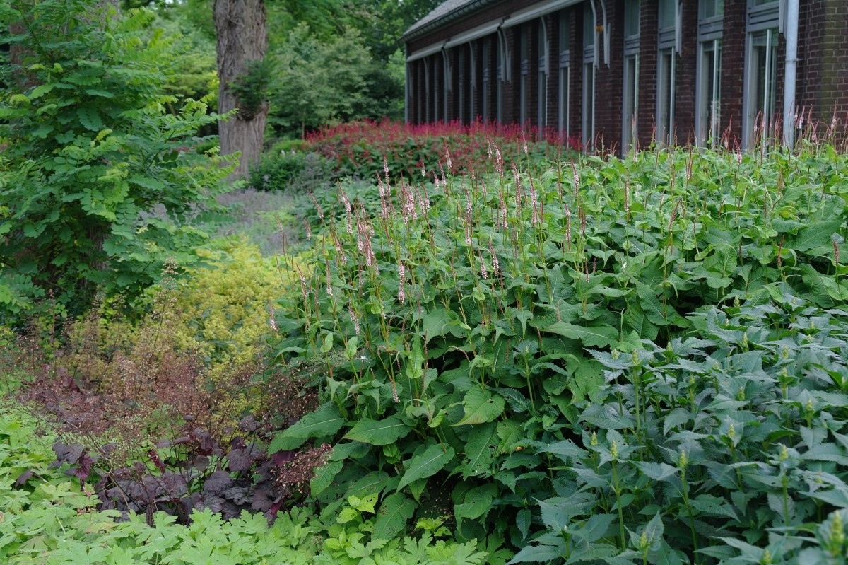 Green-to-Colour_20120719 (1)