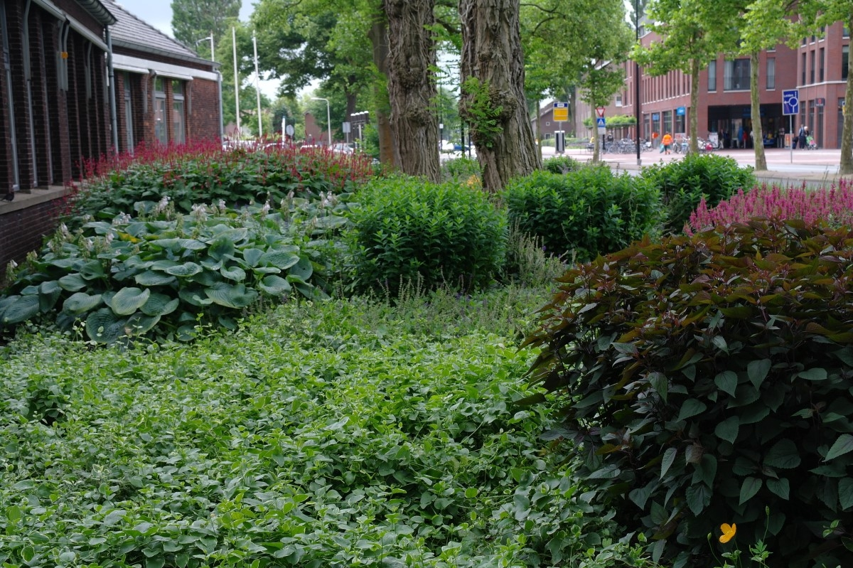 Green-to-Colour_20120719 (3)