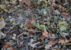 Green-to-Colour_maaien_en_mulchen (12)