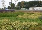 03a_Zaandam rotonde 20100902