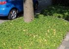 Greentocolour20150909_Onder_de_bomen (2)