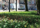 Greentocolour20150911_Onder_de_bomen (4)