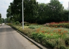 Green-to-Colour - oudste beplanting (2)