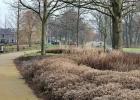 GreentoColour_20150107_buurtpark