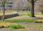 GreentoColour_20150408_buurtpark