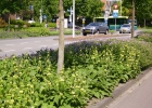 Green-to-Colour_Verkeersgeleiders (08)