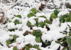 Green-to-Colour_Winterbeeld (16)
