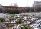 Green-to-Colour_Winterbeeld (03)