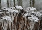 GreentoColour_winterbeeld_170118 (6)