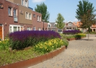 Green-to-Colour_Woonwijken (09)