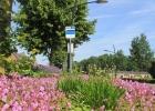 GreentoColour20160610_woonwijk (2)