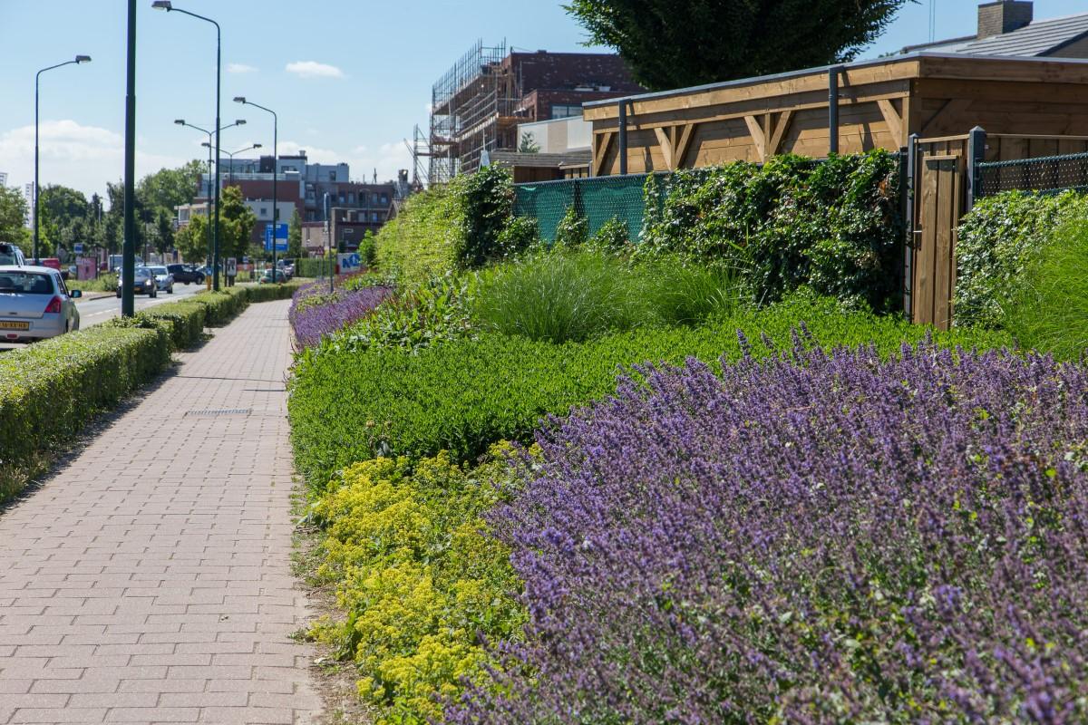 GreentoColour20170614_woonwijk (2)