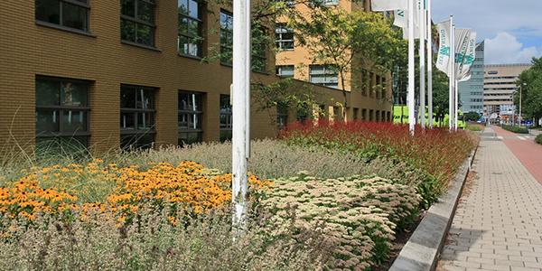 Green-to-Colour-Beplanting-in-grote-of-kleine-vakken_2